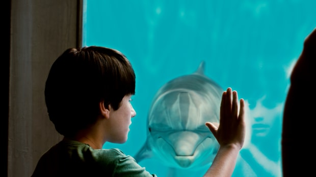 Nathan Gamble as Sawyer Nelson and Winter as herself, in Alcon Entertainment's family adventure Dolphin Tale, a Warner Bros. Pictures release.