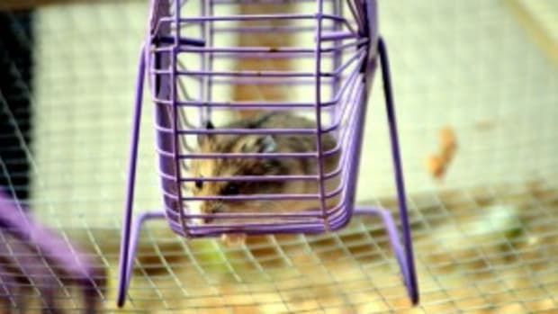 hamster-wheel purple