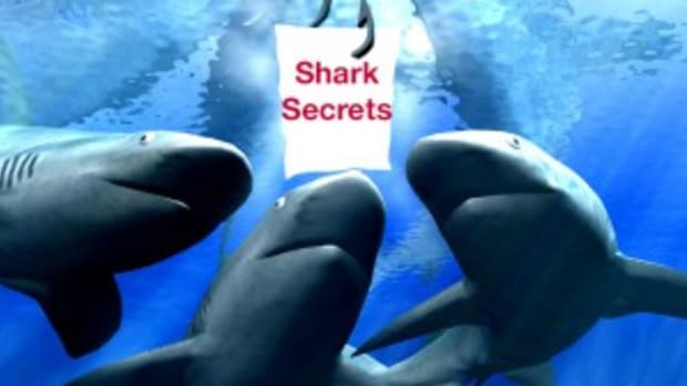 Sharpen your writing with shark secrets!