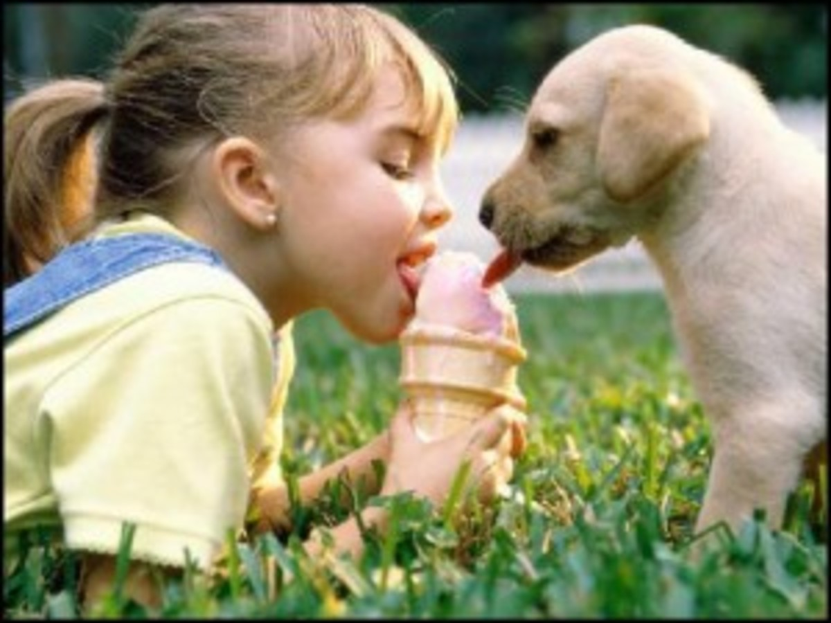 Share your paycheck, and your ice cream, with your writing partner... not your producer (unless he's as adorable as this puppy).