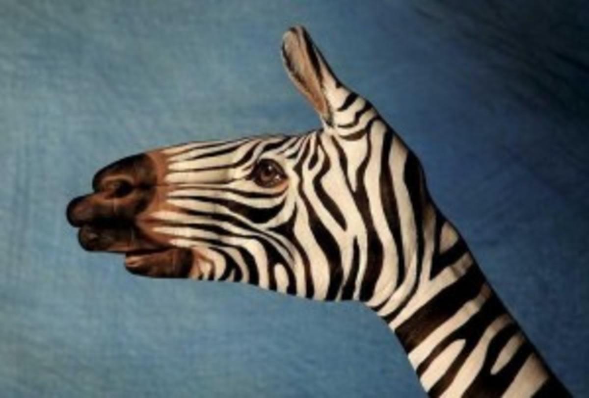 idea zebra