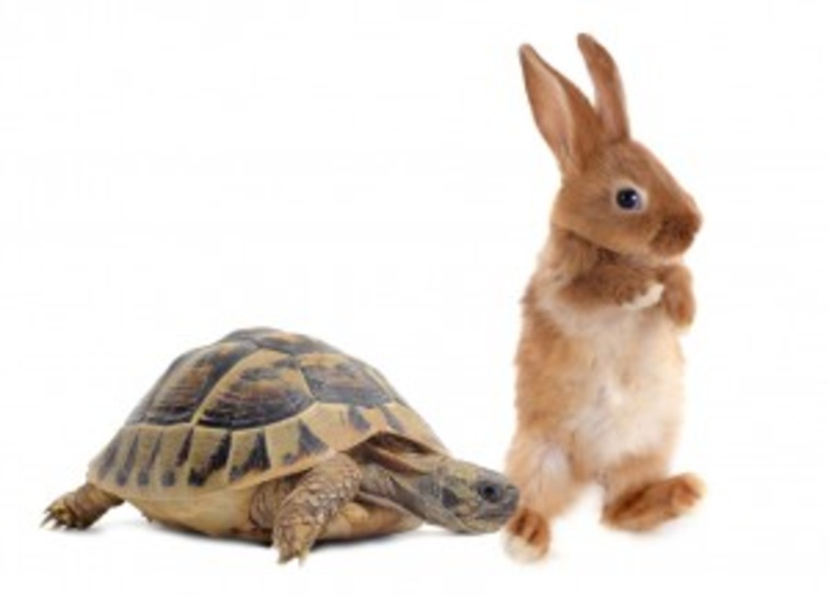 The Tortoise and The Hare.