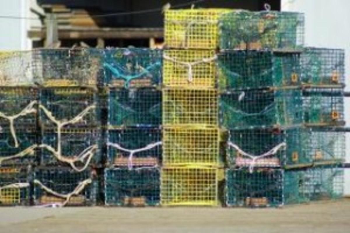 Lobsters on Board