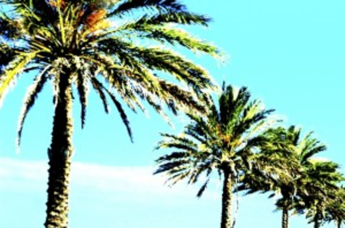 color-palm-trees