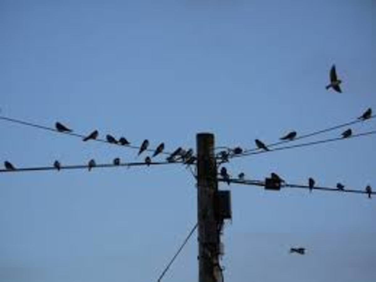 Birds.a few