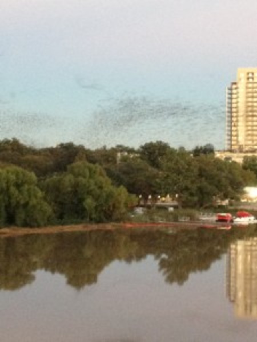 "At dusk on the ""Bat Bridge"" you can see swarms of bats take off into the sky."