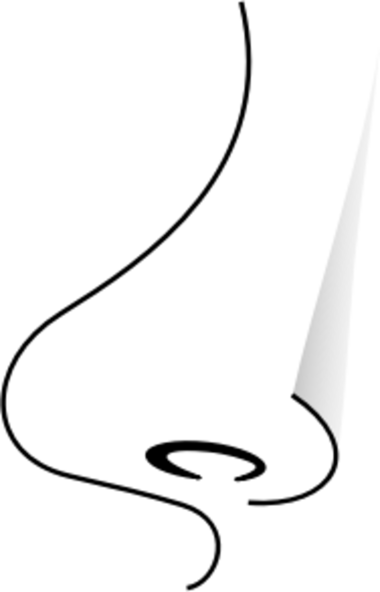 http://openclipart.org/image/300px/svg_to_png/184612/nase.png
