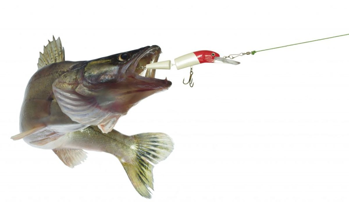 Make Sure Your Lure Is An Easy Catch