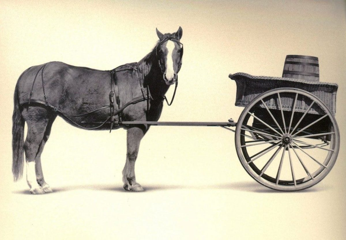 Screenwriting Resources that put the Cart Before The Horse
