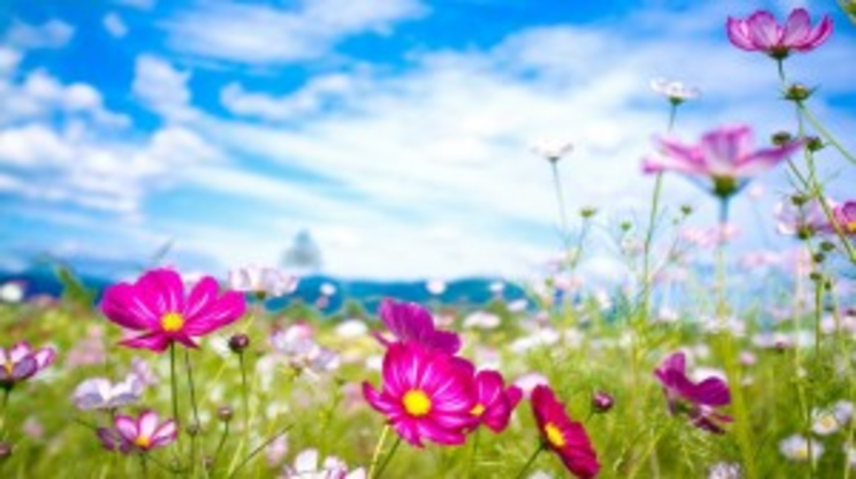 summer-flowers-wallpaper-hd-free