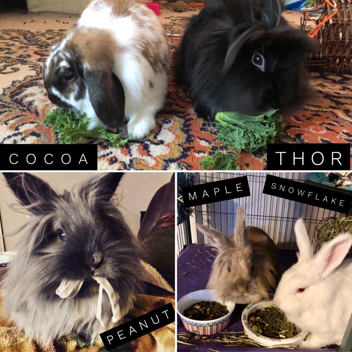 all bunnies